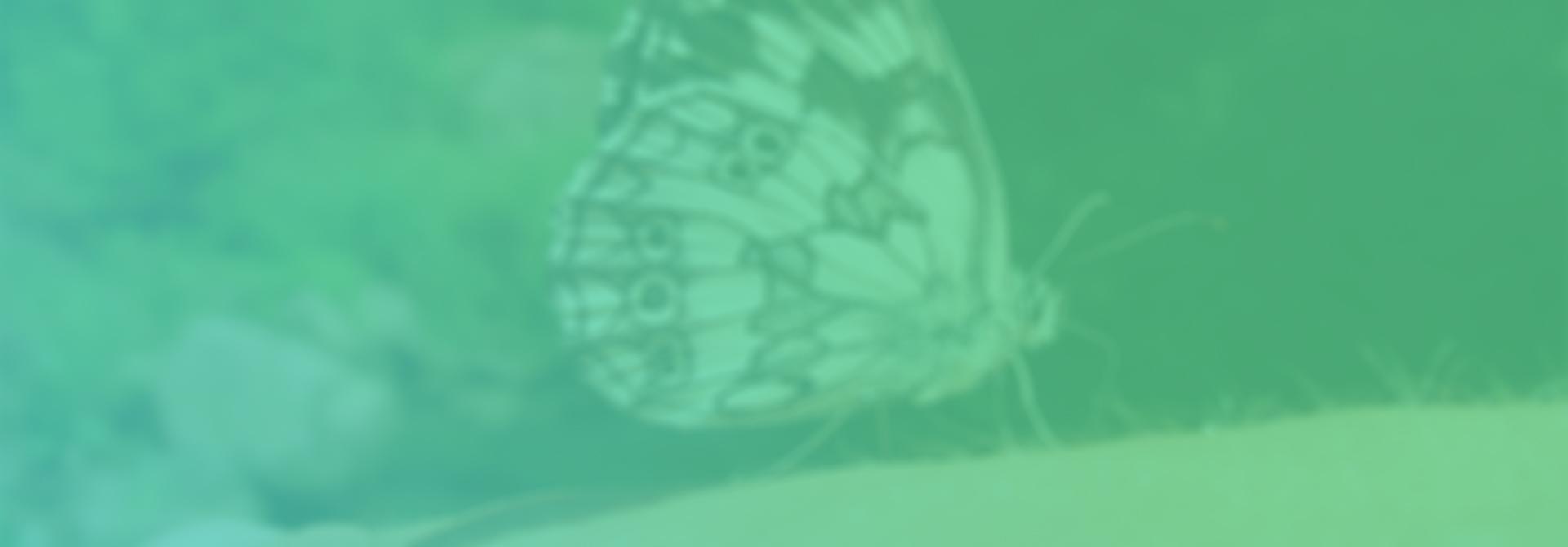 svarzvane-blur